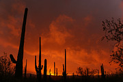 Desert Cactus Prints - Embers of the day Print by Justin  Curry