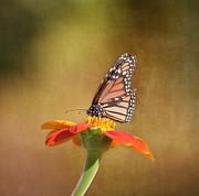 Embracing Nature Print by Kim Hojnacki