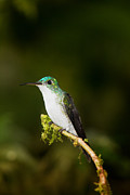 Ecuador Prints - Emerald Brilliant Print by Todd Bielby