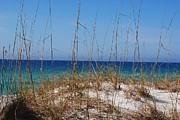 Michele Kaiser - Emerald Coast Beaches