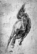 Horse Pictures Prints - Emergence Galloping Black Horse Print by Renee Forth Fukumoto