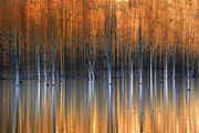 Fall Season Framed Prints - Emerging Beauties Reflected Framed Print by Marco Crupi