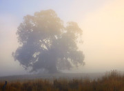Fog Mist Photos - Emerging by Mike  Dawson