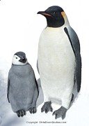 Emperor Sculptures - Emperor Penguins Super realistic Life-size by Chris Dixon