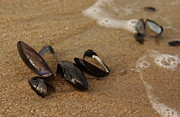 Ebb And Flow Prints - Empty Mussel Shells on Jersey Shore Print by Anna Lisa Yoder