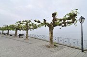 Benches Photos - Empty promenade Meersburg Germany by Matthias Hauser