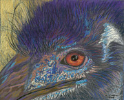 Zoo Pastels - Emu Close Up by Kate Owens
