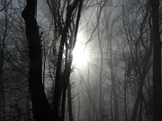 Backlit Photo Originals - Enchanted Forest by Frances Hodgkins