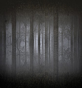 Lounge Photo Originals - Enchanted Forest by Gabor Miskolczi