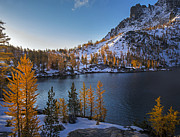Pine Trees Photo Prints - Enchantments Fall Colors Print by Mike Reid