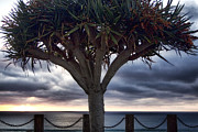 Silhouette Tree Prints - Encinitas Sunset Print by Carol Leigh