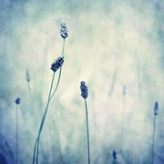 Flora Photos - Endearing by Priska Wettstein