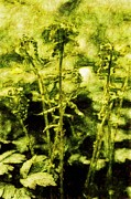 Green Foliage Drawings Prints - Endgraving Forest 5 Print by Yevgeni Kacnelson