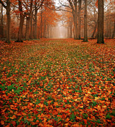 Autumn Photography Photos - Endless Autumn by Photodream Art