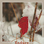 All - Endure by Darlene Bell