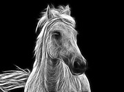 Energetic Metal Prints - Energetic White Horse Metal Print by Joachim G Pinkawa
