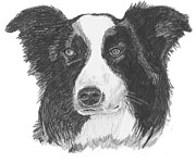 Collie Drawings Posters - English Border Collie Poster by Catherine Roberts