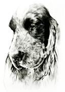 English Cocker Spaniel Posters - English Cocker Mo Poster by Linda Zielinski