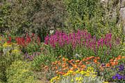 Patricia Hofmeester - English garden in summertime