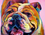 English Bulldog Paintings - English Rose by Robert Phelps