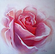 Sandra Phryce-Jones - English Rose