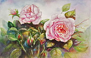 Patricia Schneider Mitchell - English Roses
