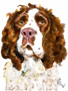 Lois  Ivancin Tavaf - English Springer Spaniel