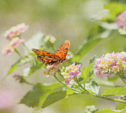 Gulf Fritillary Photos - Enjoy the Little Things by Kim Hojnacki