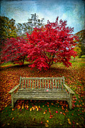 Japanese Maple Posters - Enjoy the View Poster by Adrian Evans