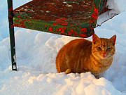 Winter Roads Photos - Enjoying The Snow by Tina M Wenger