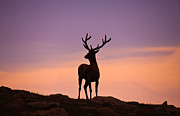 Antlers Metal Prints - Enjoying the View Metal Print by Darren  White