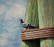 Enjoying The View Print by Kim Hojnacki