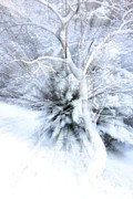 Snowed Trees Photo Prints - Enlightened Print by Xoanxo Cespon