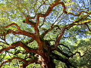 Angel Oak Posters - Entangled Beauty Poster by Karen Wiles