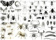 Entomology Myriapoda And Arachnida  Print by English School