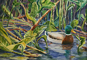 Florida Waterscape Originals - Environmentally Sound - Mallard Duck by Roxanne Tobaison