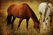 Gray Horses Photos - Equine Friends by Theresa Tahara