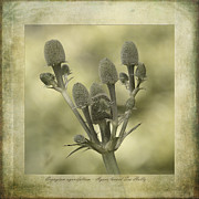 Green Background Posters - Eryngium agavifolium Poster by John Edwards