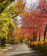 Chico Originals - Esplanade in the Fall by Darren  Names