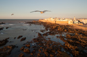 Moroccan Photos - Essaouira by Daniel Kocian