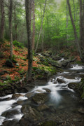 Ethereal Water Prints - Ethereal Forest Print by Bill  Wakeley