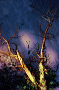 Dusk Digital Art Originals - Eucalyptus Night Tree by Petros Yiannakas