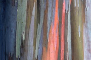 Coloured Bark Framed Prints - Eucalyptus Tree Bark Framed Print by Karon Melillo DeVega