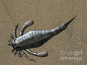 One Animal Digital Art Posters - Eurypterus Tetragonophthalmus, Silurian Poster by Nobumichi Tamara