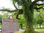Christopher Fridley - Evangeline Oak