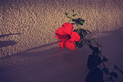 Red Flowers Photos - Evening Comes Softly by Laurie Search