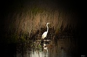 Maria Urso - Artist And Photographer Acrylic Prints - Evening Egret Acrylic Print by Maria Urso - Artist and Photographer