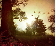 Silhouette Digital Art Prints - Evening Flying Geese Print by Bedros Awak