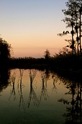 Ar Annahita Framed Prints - Evening in the Everglades Framed Print by AR Annahita
