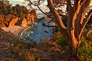Big Sur Ca Metal Prints - Evening Light At Pfeiffer Burns Metal Print by Adam Jewell